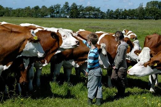 farm-i-see (2)
